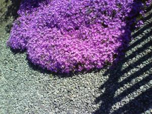Bodendecker mit Splitt und Schatten
