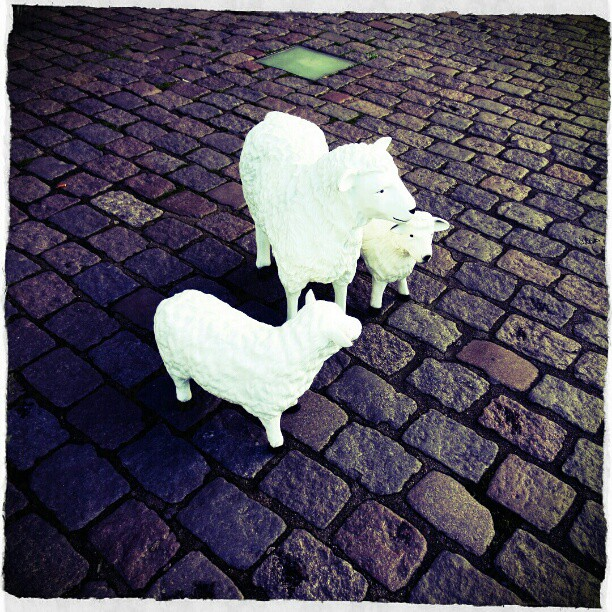 Photo: #Ghent #Sheep #RA12