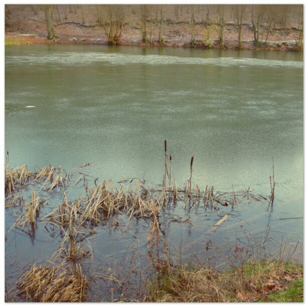 Photo: #Wintry #pond. #Trier