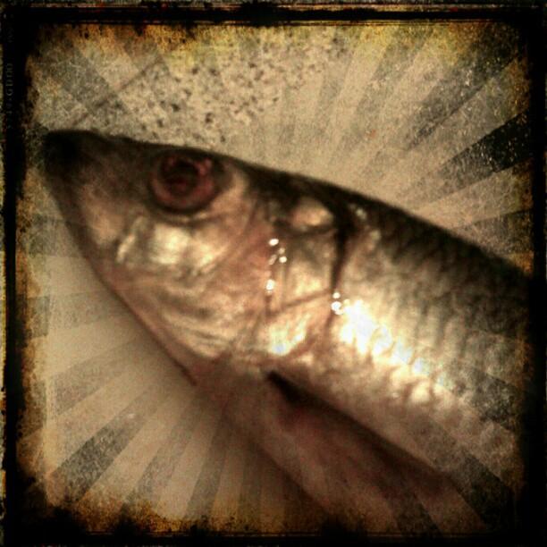 Photo: Bei @nebelicious in der Küche... #Fisch