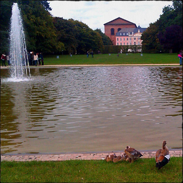 Photo: #Nil-#Gänse (mit #Küken) im #Palastgarten an der #Fontäne an den #Kaiserthermen. #Trier