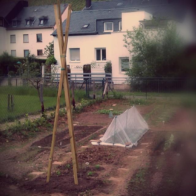 Photo: Rankhilfe. Hoffentlich rankt dann auch etwas. #Bohnen #Garten #Kleingarten #Trier