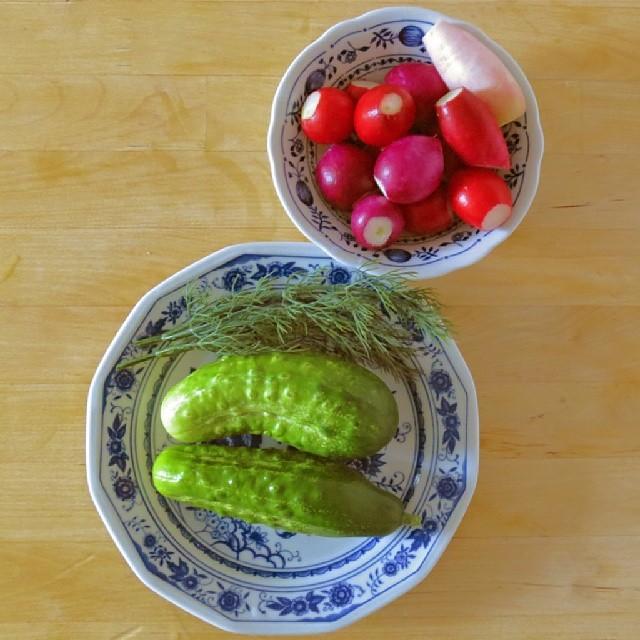 Photo: Daily #crop. #allotment #garden #radish #dill #cucumber #Eva #Saxa 2 #red #green #plate #food #colorful #instafood #vegetables #vegetarian #foodporn #fresh #healthy