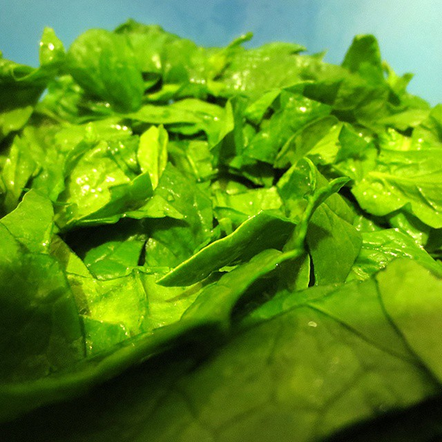 Photo: #Spinat #spinach #green #harvest #garden