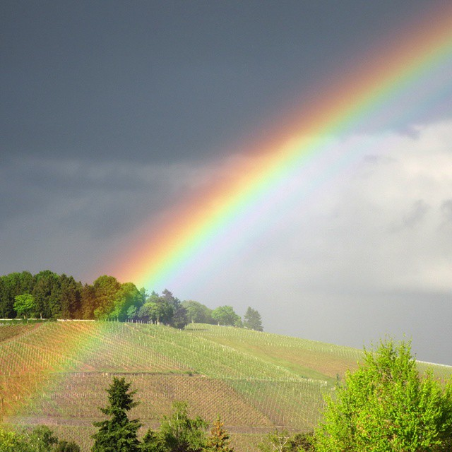 Photo: Last picture of today's series of #rainbowporn. #rainbow #Trier #vineyard