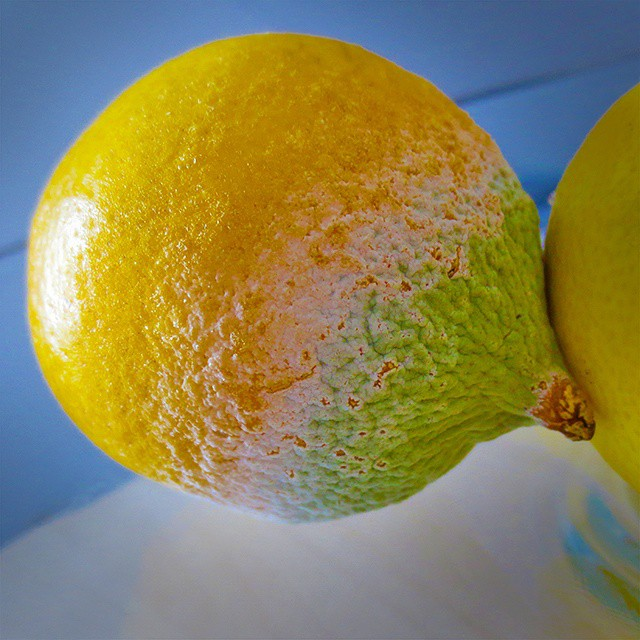 Photo: If life gives you #lemons, don't let them go mouldy. #mould #mold #lemon #yellow #green