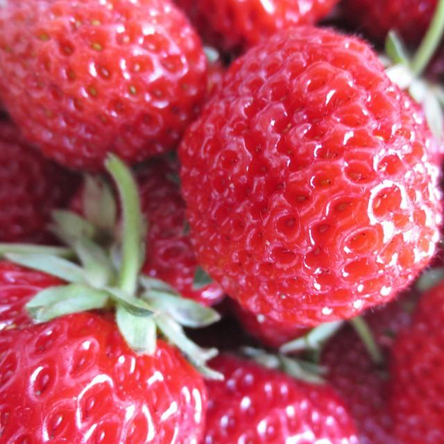 Photo: Picked #strawberries for a pie today. #miezeschindler#mieze#strawberry#red#garden#allotment#urbangardenersrepublic#foodporn#fruit#veggies#yummy#strasberry#framberry