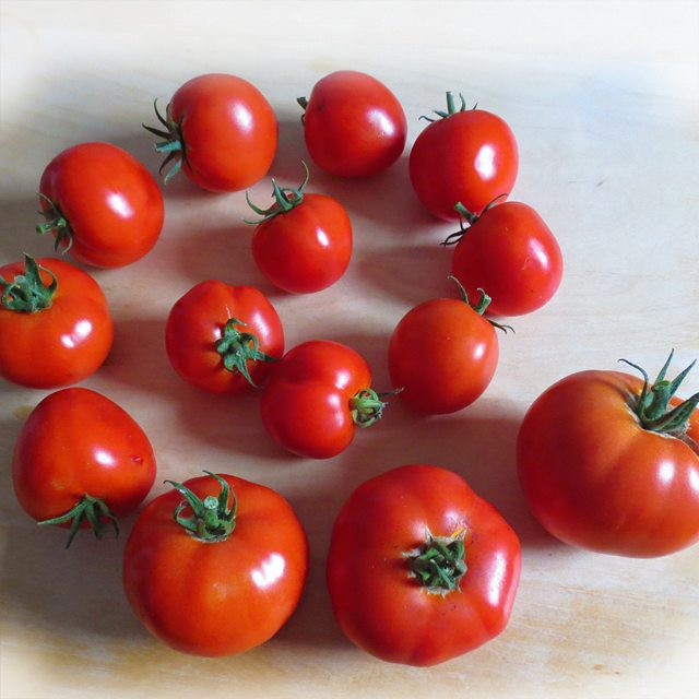 Photo: #Tomatoes from the #allotment. #tomatoe #red #food #veggies #urbangardenersrepublic