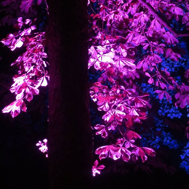 Photo: #Illuminale in #Trier. #lights #lightart #colours #pink #purple #tree