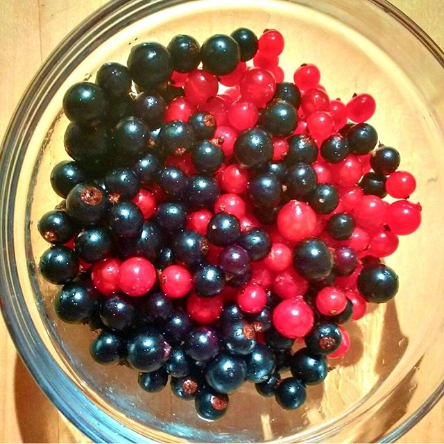 Photo: Slim #blackcurrant harvest this year. Gonna stretch the jam with #redcurrant  #berries. #allotment #gardening #fruit #veggie #organic #food #red #black