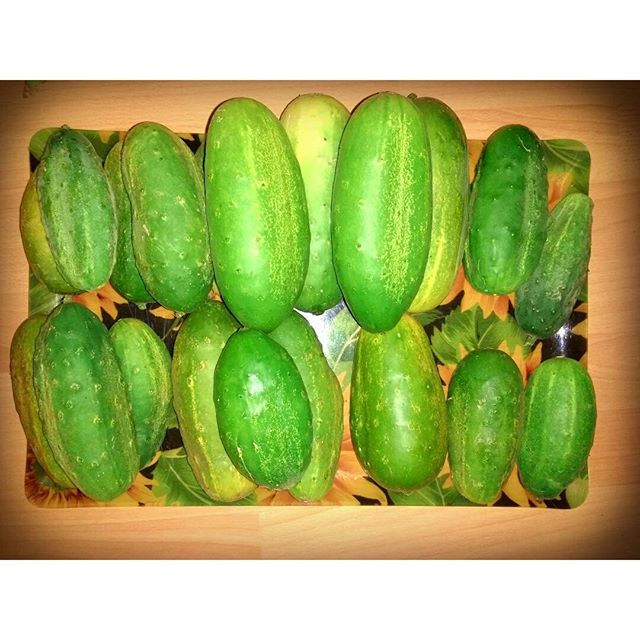 Photo: Too many #cucumbers. #green#veggy#garden#allotment#urbangarden#organic#homegrown#eva