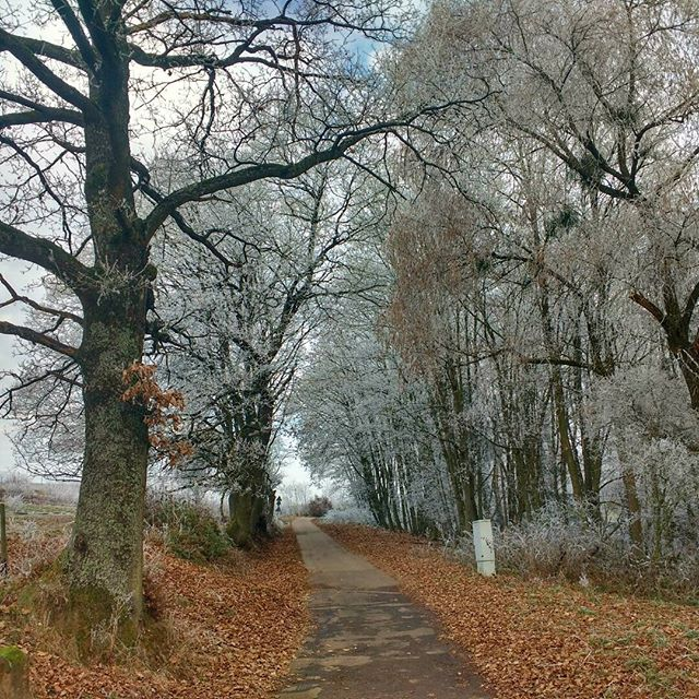 Photo: Cold but dry: Wintry ride to work. #Trier  #Winter #Trees #cycling #scenic #path #ice