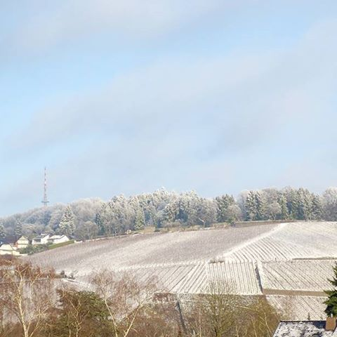 Photo: #Petrisberg in #Trier after first #snow in 2017. #trees#sky#aussichtspunkt#winter#vinyard#Germany#cold#january2