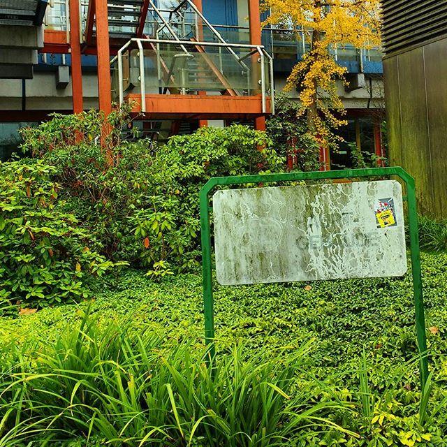 Photo: #Herbstlich und #grün @uni_trier #Trier#Blätter#Pflanzen#hebst#moos