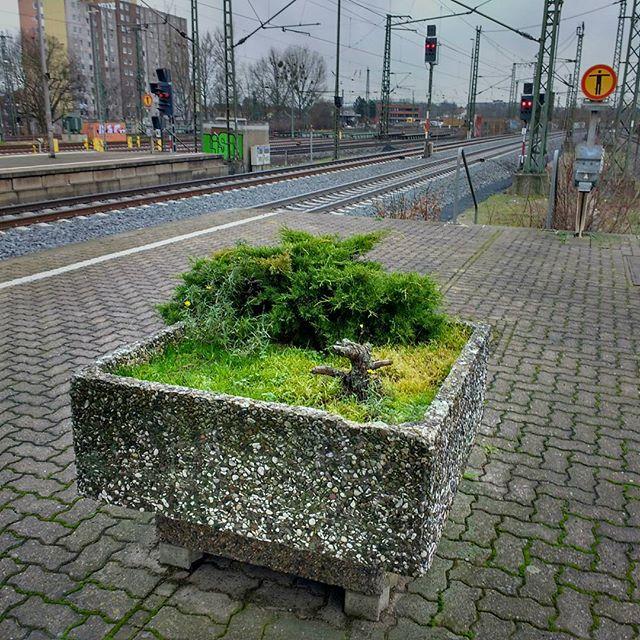 Photo: #Grüner #Bahnhof #Göttingen. #grün#Pflanzen#schienen#bahn