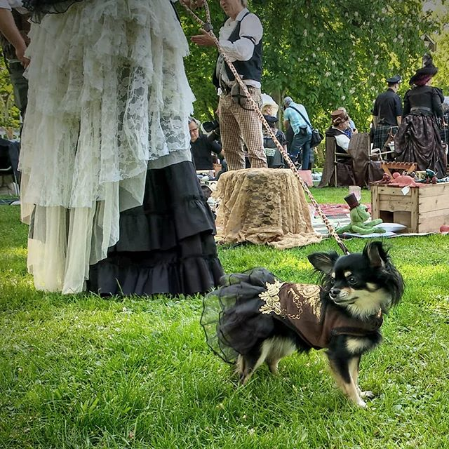 Photo: #steampunk #picknick #Ludwigsburg #blüba #dog #victorian #dress