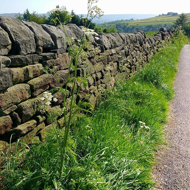 Photo: A Stone #wall in #Heptonstall. #England #North #rural #pastoral #countryside