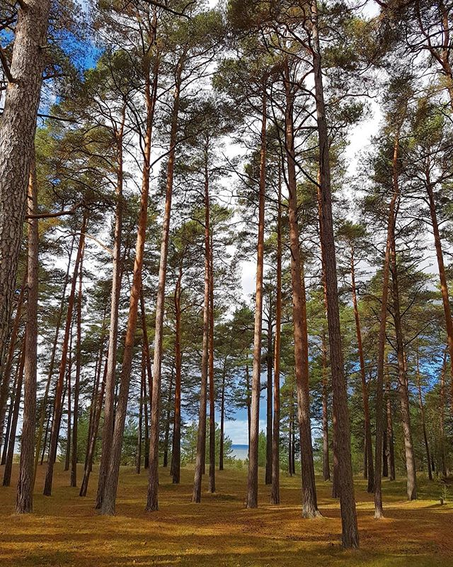 Photo: #wood near #loksa. #balticsea #estonia