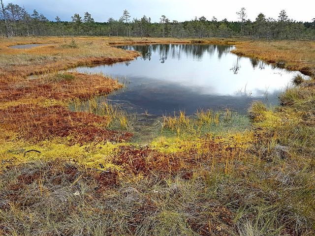 Photo: #Viruraba #swamp in #lahemaa national park. Don't step on green or yellow! #colours #Estonia
