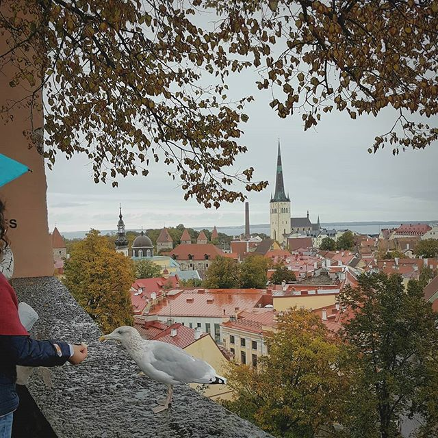 Photo: #View over #Tallinn with #seagull.