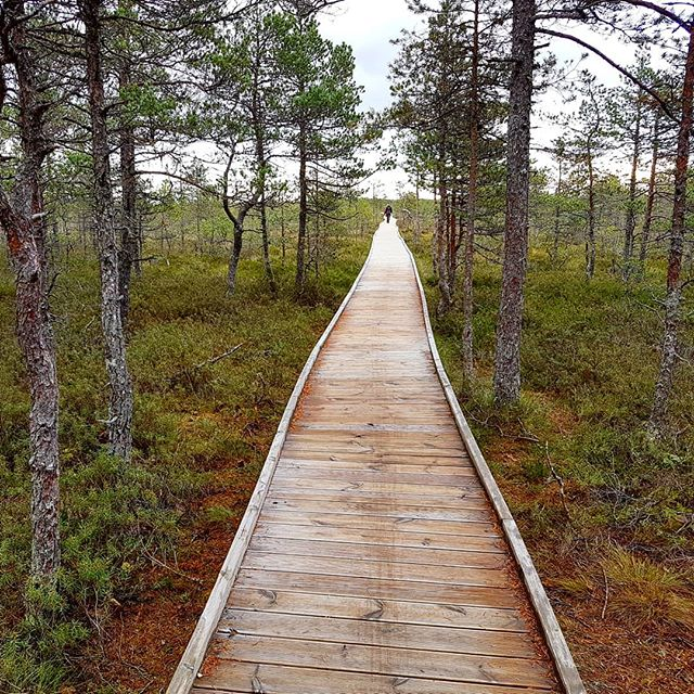 Photo: #Viruraba. #moor #path #estonia #lahemaa