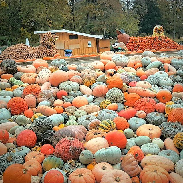"""Photo: Wo Fuchs und Hase """"Ade!"""" sagen: die #Kürbisausstellung im #BlüBa ist vorbei. #Kürbis #Ludwigsburg #blühendesbarock #lubu #luburulz #pumpkin #squash"""